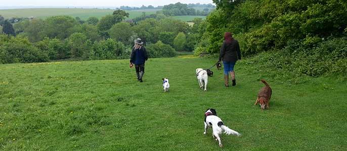 Residential Dog Training Essex