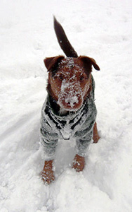 Fred in the snow